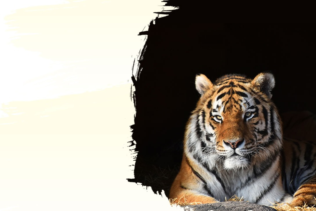 International Tiger Day: Their Survival is in Our Hands